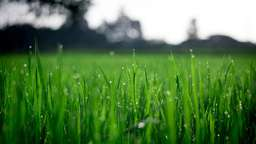 Weed free green lawn